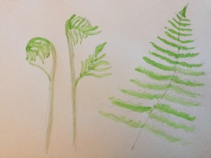 Ferns……a little bit of Spring